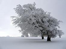 L'hiver: une période idéale pour votre rencontre amoureuse!